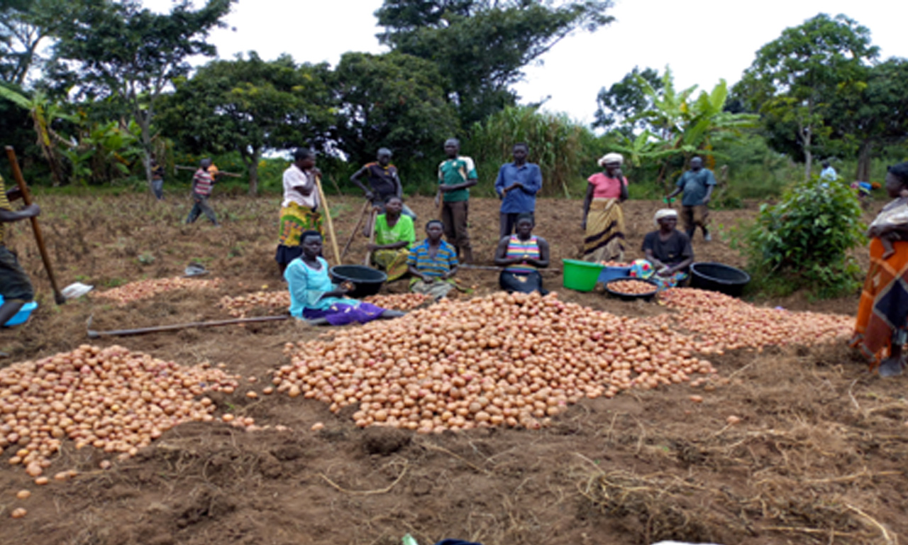 Jangokoro Food Security Project (2017-2019)